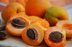 абрикос обыкновенный