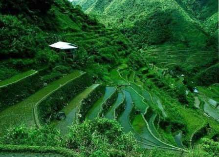 Рисовые поля Банауэ