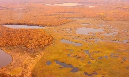 Васюганские болота что это