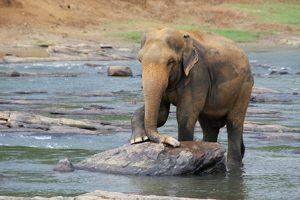 все о Шри-Ланка для туристов