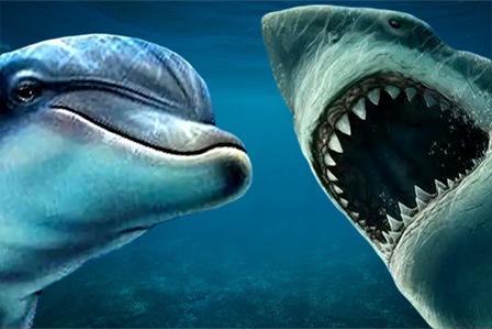 Акула или Дельфин