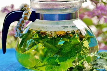 Сбор и заготовка лекарственных растений