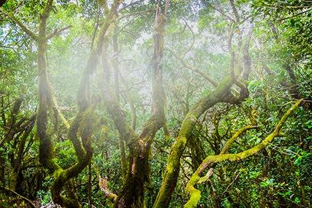 Гарахонай Национальный парк