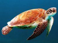 23 мая Всемирный день черепахи