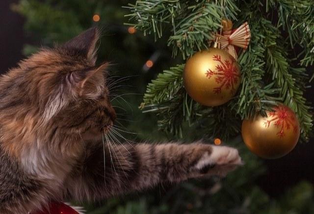 Традиция наряжать елку на Новый Год