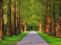 24 мая Европейский день парков
