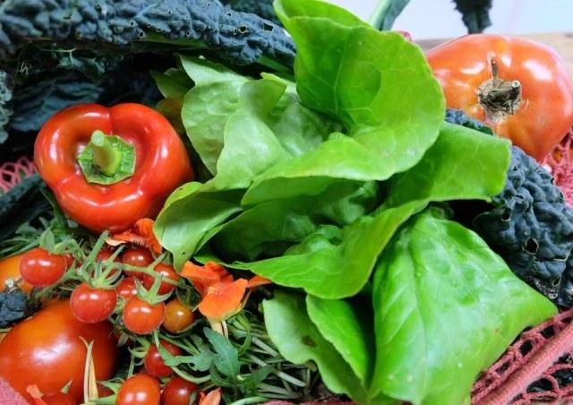 польза растительного питания